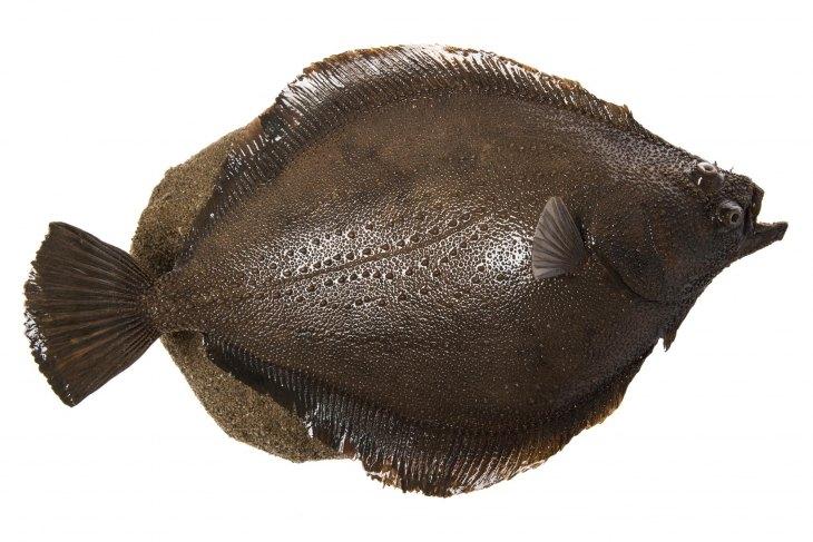история разыгралась картинка рыбы камбалы истории