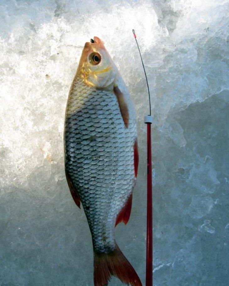 Ловля на мандулу - 105 фото простых и эффективных методов ловли судака, щуки и окуня