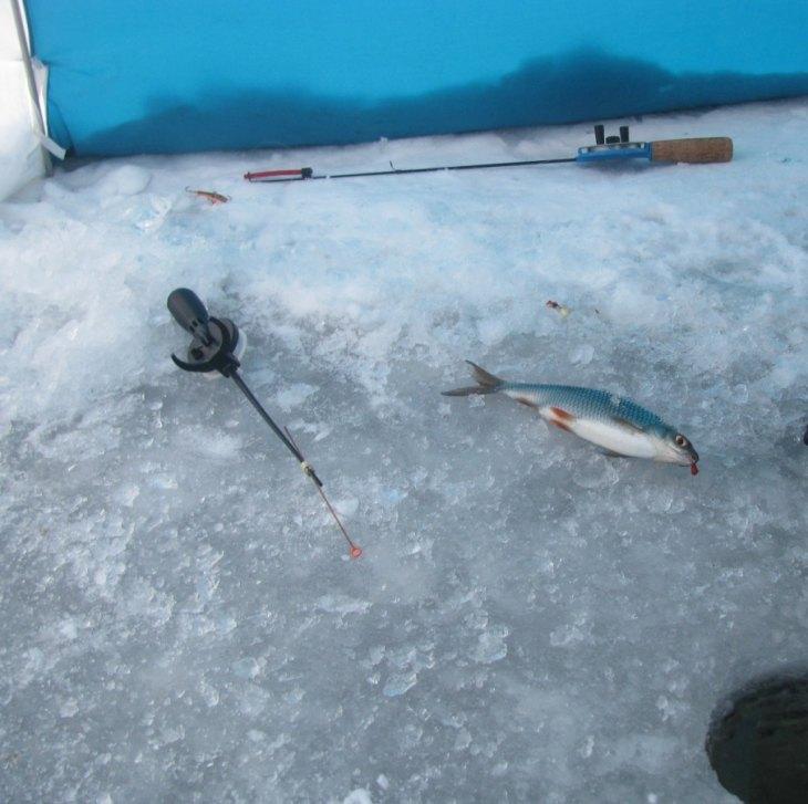 Начинающему для зимней рыбалки