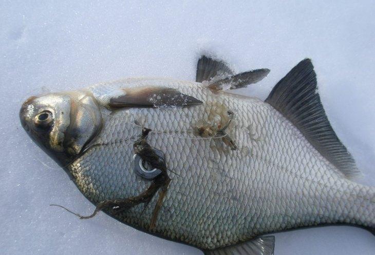 организациях как выглядит каркалыга для рыбалки фото вот