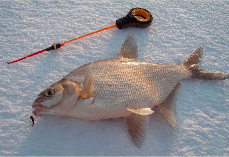 Ловля на пенопласт - 80 фото способов применения пенопласта для ловли рыбы || Как ловить на пенопласт