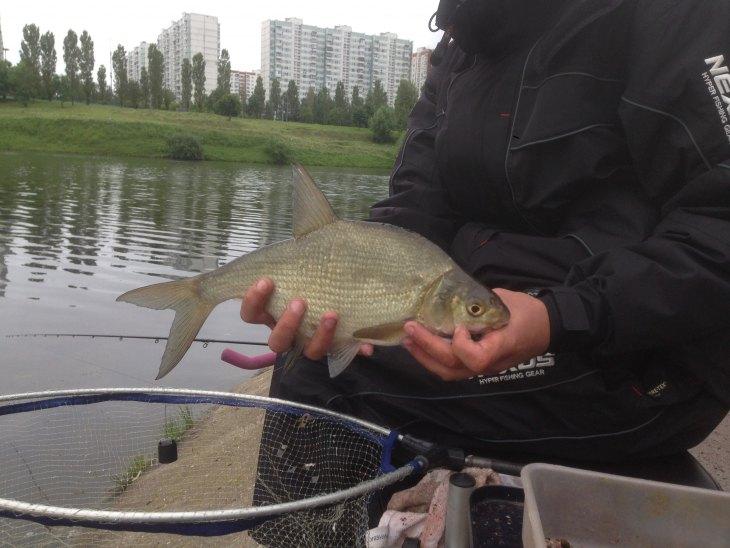 Можно ли поймать рыбу на сыр