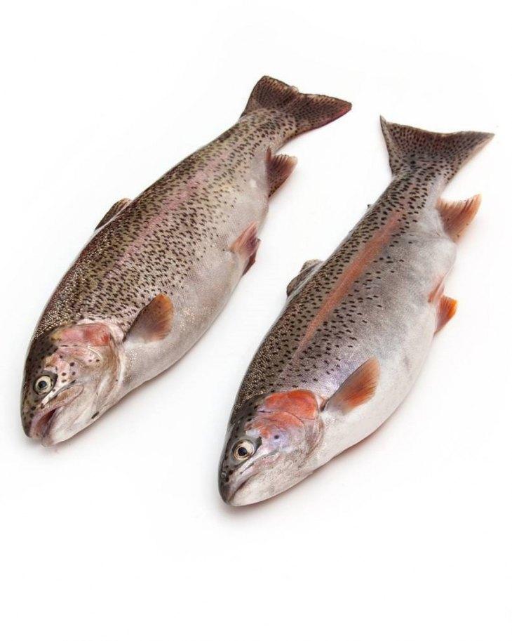 Описание рыбы форель
