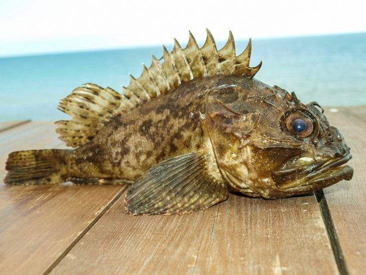 Ерш, что мы знаем об этой рыбе, как ловить ерша