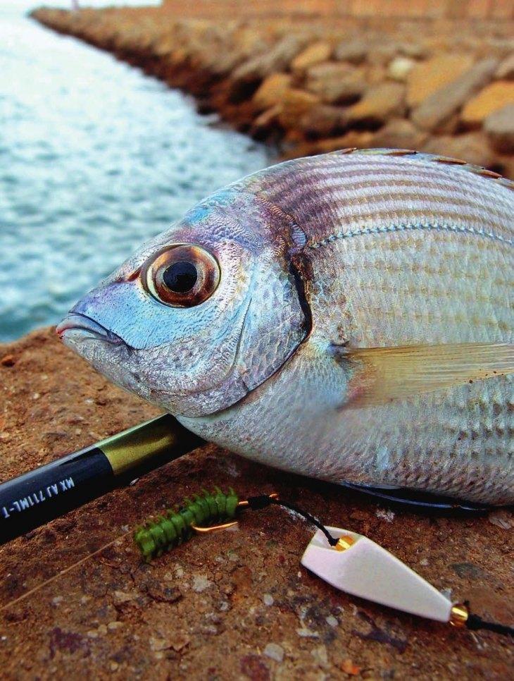ласкирь рыба фото каждого