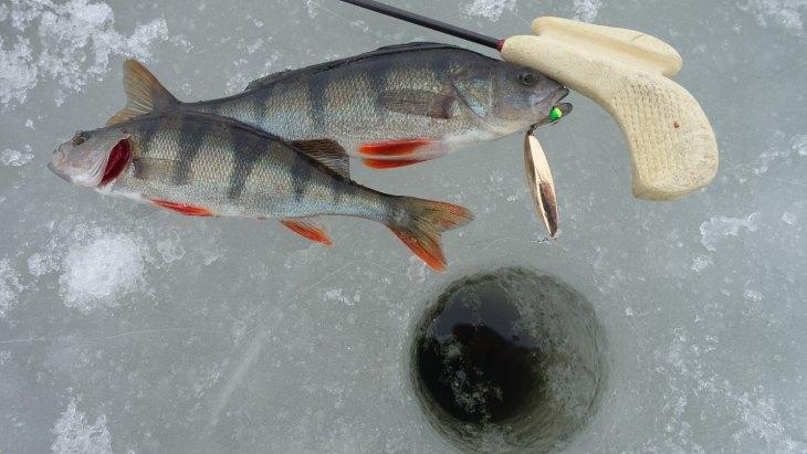 Какая леска лучше для зимней рыбалки на окуня