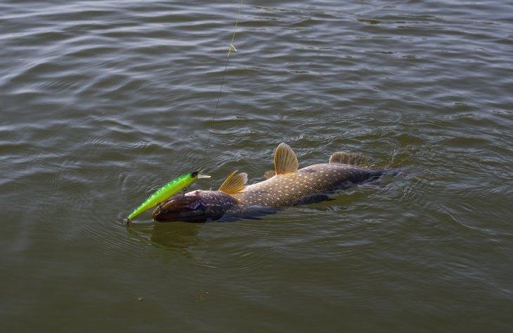 Воблеры. Рыбалка (ловля) на воблеры для начинающих